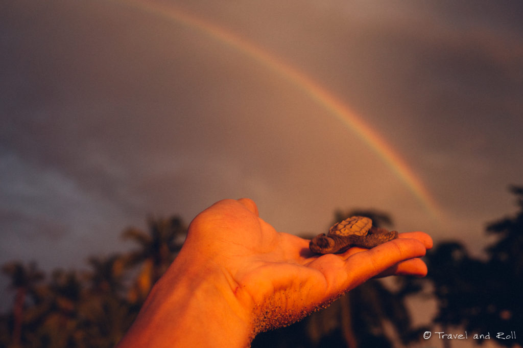 Baby turtle with the rainbow