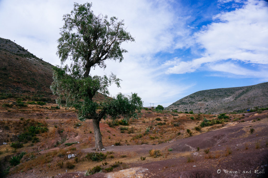 Teal de Catorce - The only tree I saw