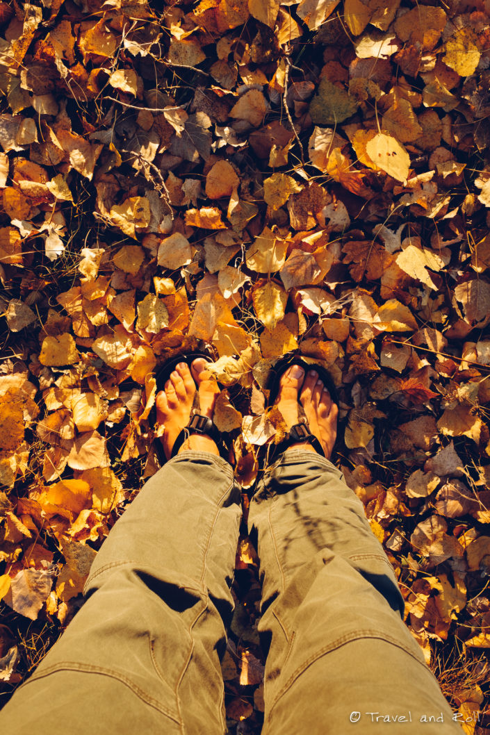 Reaching Europe, finding the fresh air and the colors of autumn on the journey without money
