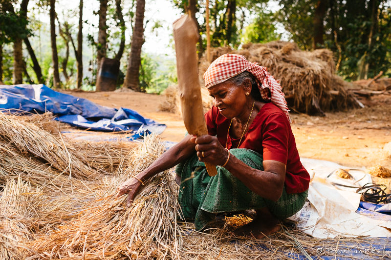 The woman hits the rice with a stick
