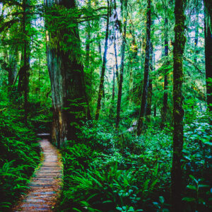 Big tree, small trees, rainforest, nature, green, canada, tofino, walk, hike trail