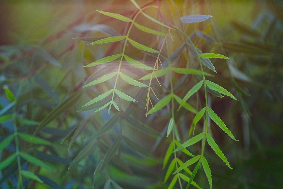 Mesmerizing nature