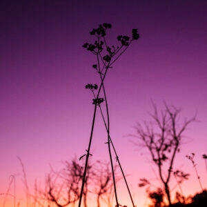 ayahuasca, nature, cerrado, brazil, sunset, plant, color