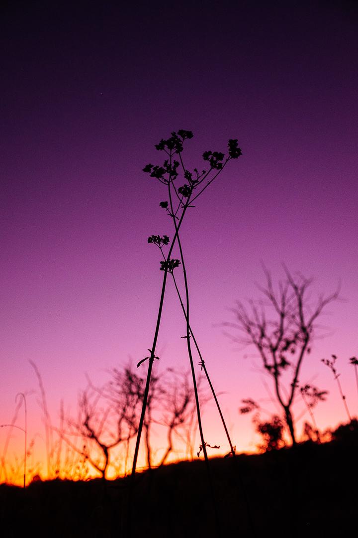 ayahuasca, nature, cerrado, brazil, sunset, plant, color