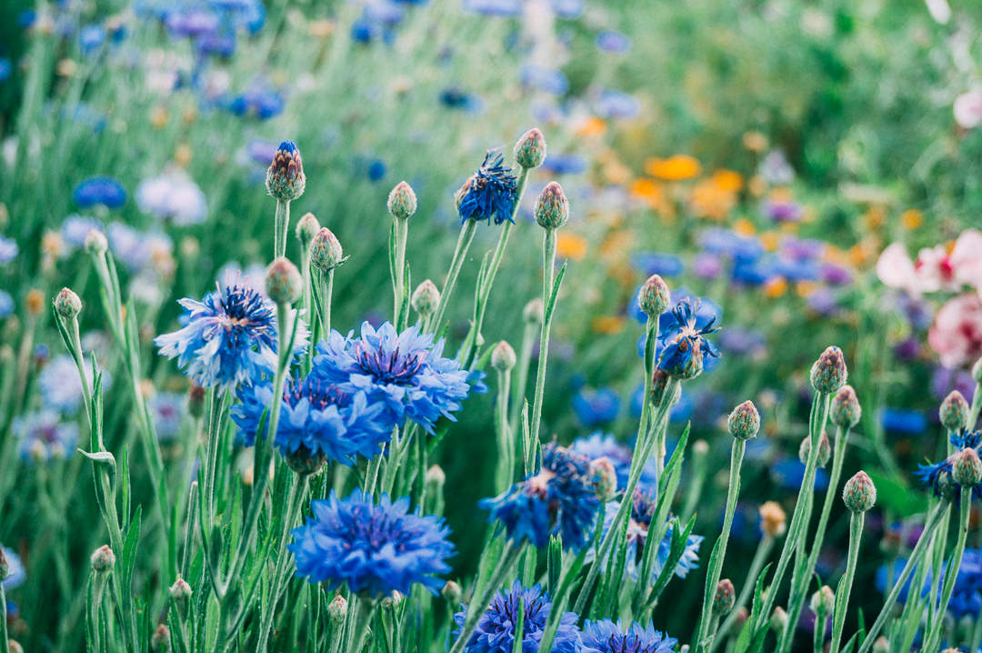 wild flowers in a garden of india