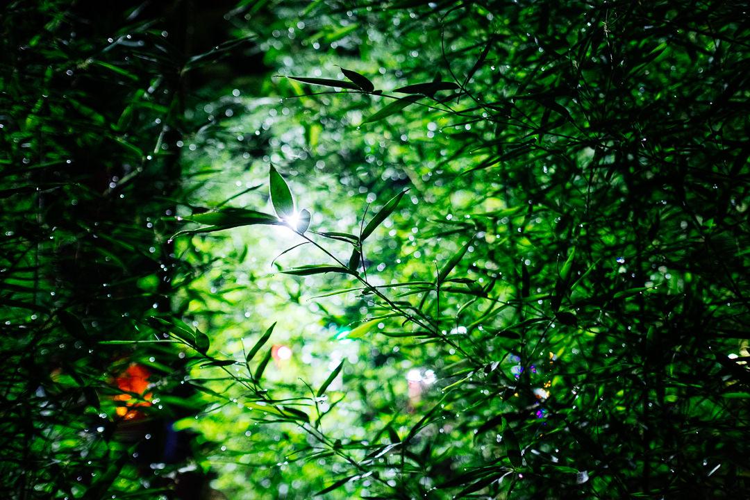 ayahuasca, nature, light, spirituality, green, yoga, vegan