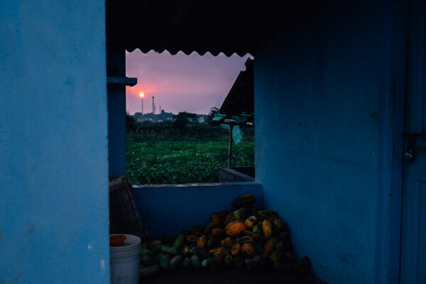 color, paint, art, sunset, india, farm, organic